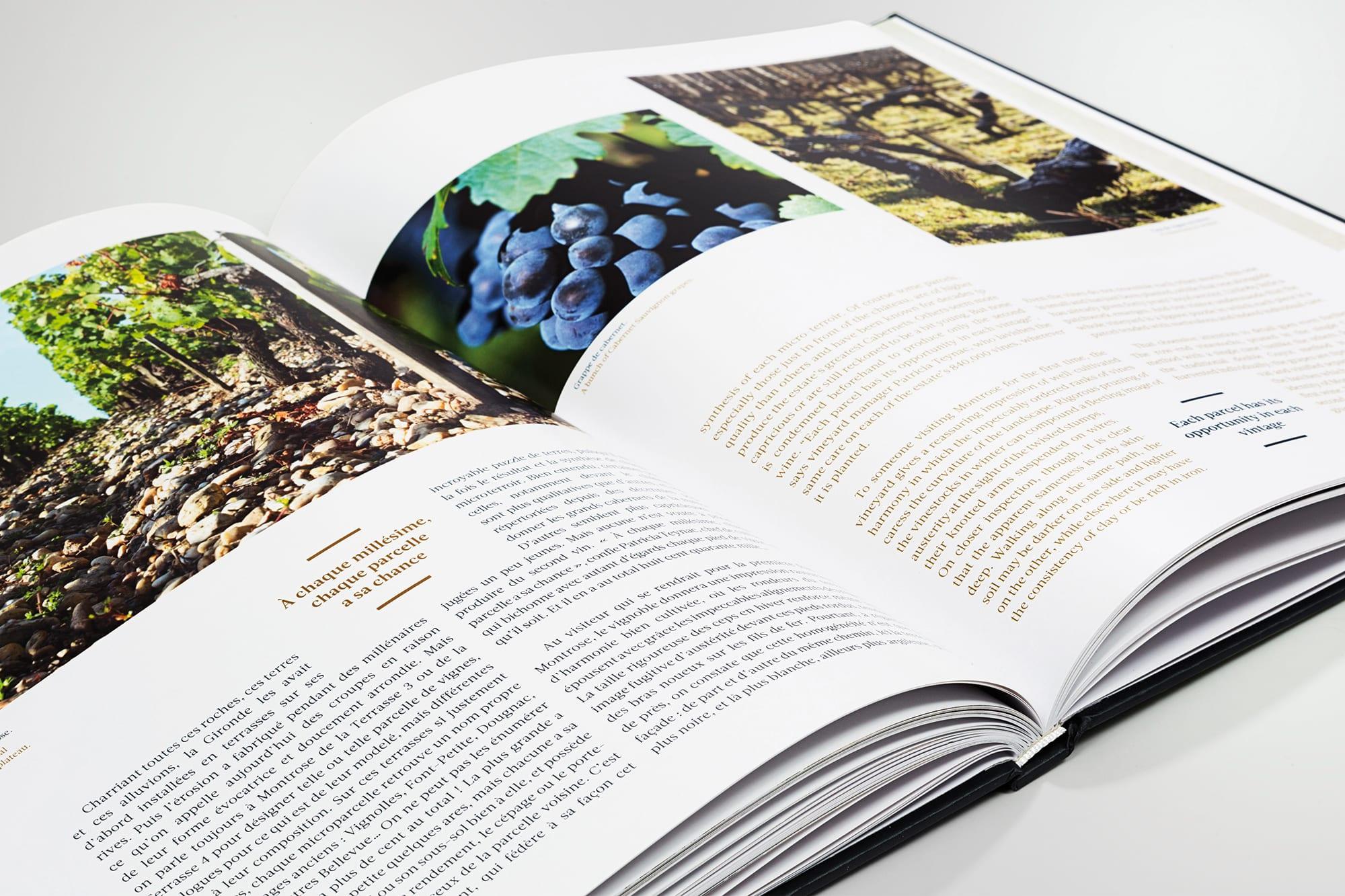 Montrose, histoire de la vigne